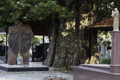 """Cimitero Cattolico di Scutari - Scutari - Albania. L'enorme tiglio """"testimone"""" delle fucilazioni del regime con la targa commemorativa."""